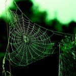 Cos'è il Dark web?
